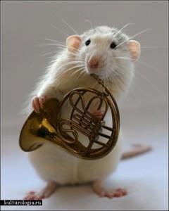 rats_music12