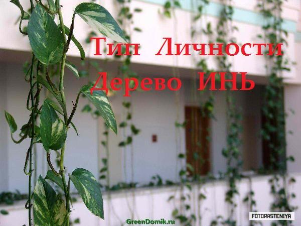 lianovye-komnatnye-rasteniya-foto-8