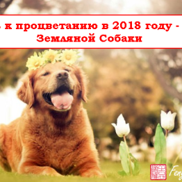 Путь_процветание_2018